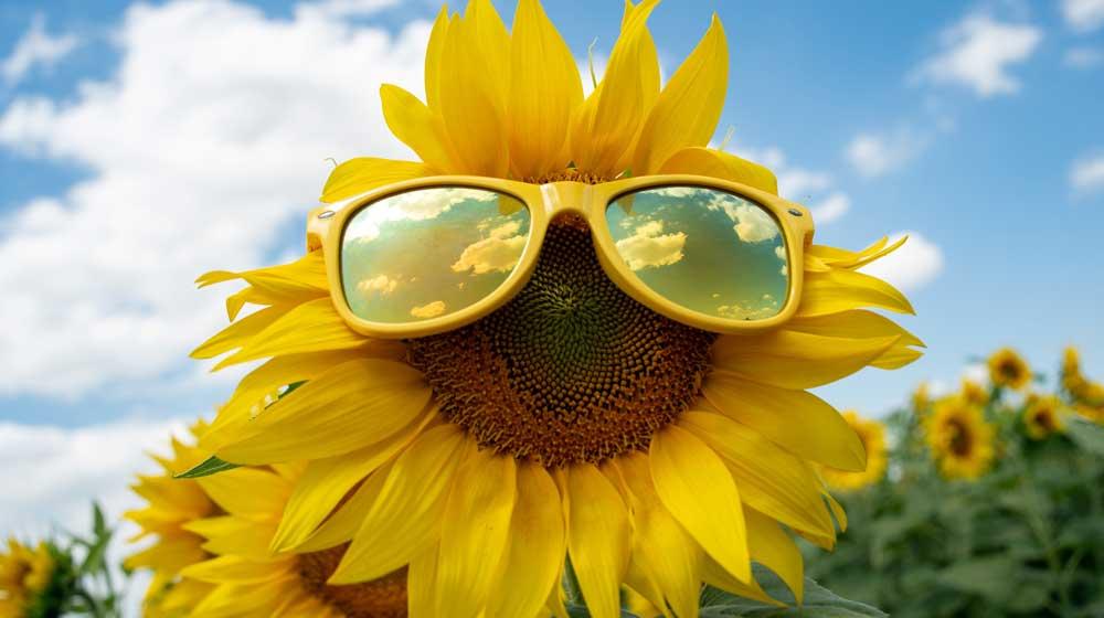 【おすすめ】JINSの調光レンズ(度付きサングラス)を1年使用した感想【もう手放せない!】
